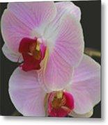 Fairy Blush Orchids Metal Print