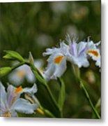 Fairy Iris 2 Metal Print