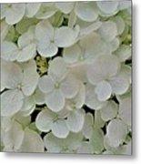 Fairy White Flowers Metal Print