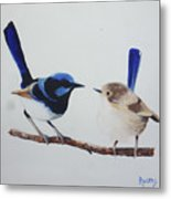 Fairy Wrens - I Love You Too  Metal Print