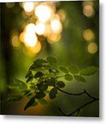 Fairyland Trees Metal Print