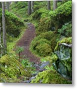 Fairytale Trail Metal Print