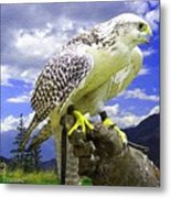 Falcon Being Trained H A Metal Print