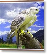 Falcon Being Trained H B With Decorative Ornate Printed Frame. Metal Print