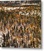 Fall And Winter On The Same Day Metal Print