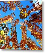 Fall Apricot Leaves Metal Print