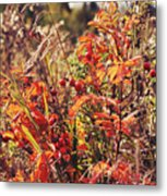 Fall Around  Metal Print