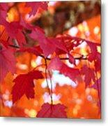 Fall Art Red Autumn Leaves Orange Fall Trees Baslee Troutman Metal Print