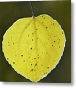 Fall Aspen Leaf Metal Print