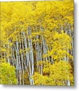 Fall Aspen Meadow Metal Print