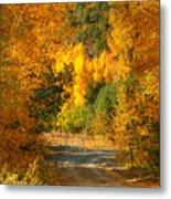 Fall Aspen Trail Metal Print