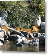 Fall At The Creek Metal Print
