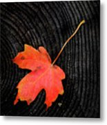 Fall Autumn Leaf On Old Weathered Wood Stump From A Tree Metal Print