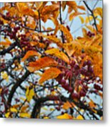 Fall Berries Metal Print