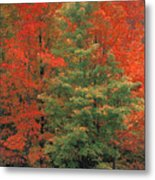 Fall Brilliance Metal Print
