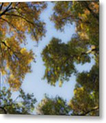 Fall Canopy In Virginia Metal Print