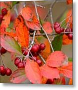 Fall Color 1 Metal Print