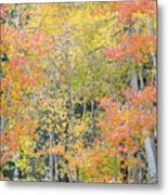 Fall Color At North Lake Metal Print