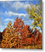 Fall Color Comes To Oak Trees Along Route 31 Metal Print
