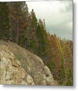 Fall Color Evergreens Metal Print