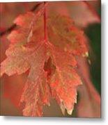 Fall Color In Softness Metal Print