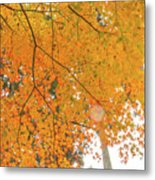 Fall Color Maple Leaves At The Forest In Aichi, Nagoya, Japan Metal Print