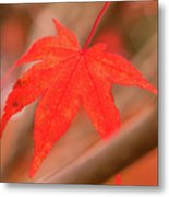 Fall Color Maple Leaves At The Forest In Kamakura, Kanagawa, Jap Metal Print