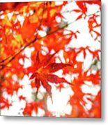 Fall Color Maple Leaves At The Forest In Kochi, Japan Metal Print