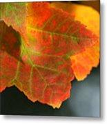 Fall Color Metal Print