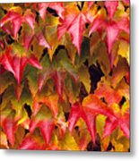 Fall Colored Ivy Metal Print