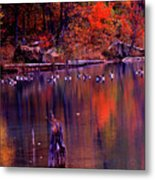 Fall Colors And Geese Metal Print