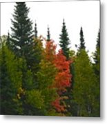 Fall Colors Are Starting Metal Print