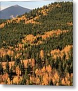 Fall Colors At Rocky Mountain National Park Metal Print