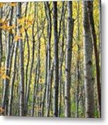 Fall Colors In Maine 2 Metal Print