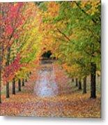 Fall Colors In Oregon Metal Print