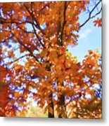 Fall Colors Looking Awesome Metal Print