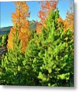 Fall Comes To Dillon Colorado Metal Print