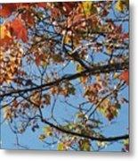 Fall Metal Print