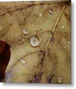 Fall Droplets Metal Print