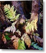 Fall Ferns Metal Print