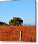 Fall Field Metal Print