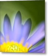 Fall Flower Metal Print