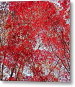 Fall Foilage Metal Print