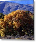 Fall Foliage And Hills, Carson City Metal Print
