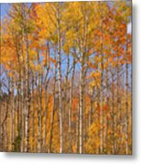 Fall Foliage Color Vertical Image Metal Print