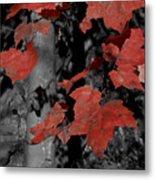 Fall Foliage In Pennsylvania Metal Print