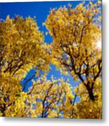 Fall Foliage Near Ruidoso Nm Metal Print