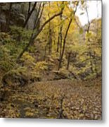 Fall Foliage Number 57 Metal Print