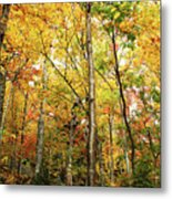 Fall Foliage On The Hike Up Mount Monadnock New Hampshire Metal Print