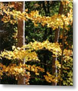 Fall Forest 1 Metal Print